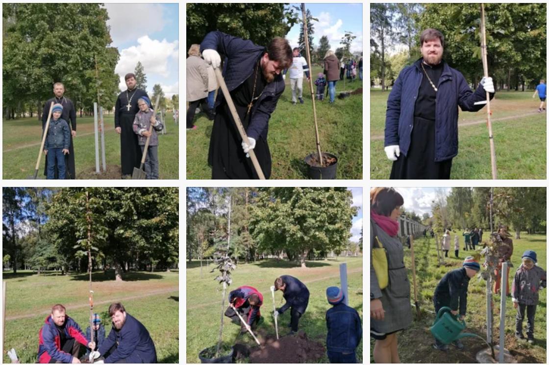 21 сентября в Коломне прошла экологическая акция Наш лес. Посади своё дерево. В рамках акции силами 6 400 участников в округе высадили 8400 саженцев клена, рябины, кизильника, спиреи, ивы, липы и березы